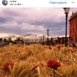 Цветочный джем: Тульское поле в Москве, Фото: 23