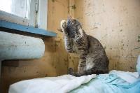 Волонтеры спасли кошек из адской квартиры, Фото: 86
