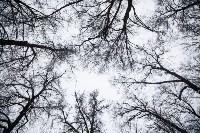 Темная сторона Платоновского парка, Фото: 10