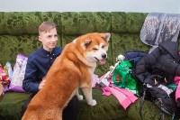 Всероссийская выставка собак 2017, Фото: 32