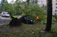 На автомобиль упало дерево, Фото: 4