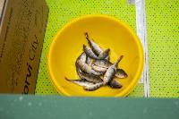 В Туле выбрали лучших рыбаков по ловле на блесну со льда, Фото: 57