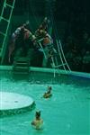 В Тульском цирке прошла премьера аква-шоу, Фото: 73