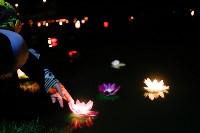 Фестиваль водных фонариков., Фото: 47