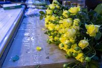 Миллион разных роз: как устроена цветочная теплица, Фото: 63
