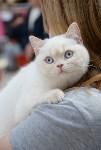 """Выставка """"Пряничные кошки"""" в ТРЦ """"Макси"""", Фото: 68"""