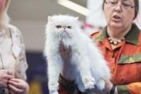 Выставка кошек в МАКСИ, Фото: 39