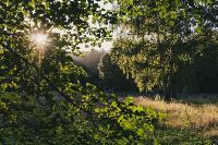 Летний день в богородицком парке, Фото: 47