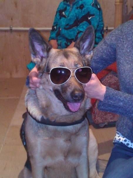 Лопух -- собака-полицейский ))))))