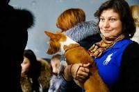 Выставка собак в Туле, Фото: 56