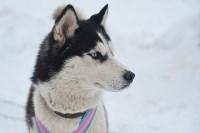 Праздник северных собак на Куликовом поле , Фото: 33