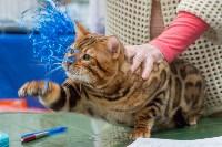 Выставка кошек в Туле, Фото: 25
