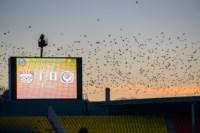 Арсенал - Амкар. 23.11.2014, Фото: 44
