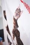 """Выставка """"Пряничные кошки"""". 15-16 августа 2015 года., Фото: 33"""