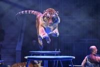 Цирковое шоу, Фото: 112