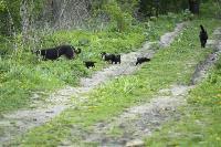 Бродячие собаки погубили рассаду тулячки и довели ее до сердечного приступа, Фото: 14
