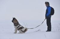 Праздник северных собак на Куликовом поле , Фото: 80