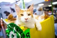 """Выставка """"Пряничные кошки"""". 15-16 августа 2015 года., Фото: 119"""
