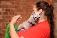 Выставка кошек в Искре, Фото: 27