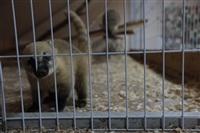 трогательный зоопарк, Фото: 18