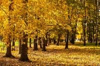 Золотая осень в Туле-2019, Фото: 117