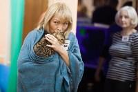 В Туле прошла выставка «Пряничные кошки» , Фото: 122
