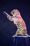 Цирковое шоу, Фото: 107