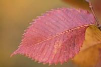 Золотая осень в Тульской области, Фото: 44