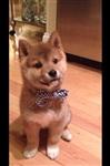 Собачья мода, Фото: 8