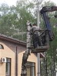 """У ресторана """"Пафос"""" срубили шесть здоровых берез, Фото: 9"""