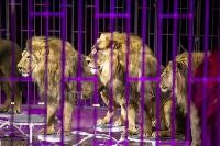 Шоу фонтанов «13 месяцев» в Тульском цирке – подарите себе и близким путевку в сказку!, Фото: 75