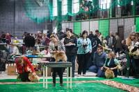 Выставка собак в Туле, Фото: 34