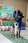 Выставка собак в Туле, Фото: 47