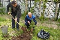 Во дворе Тульского областного краеведческого музея посадили сосны, Фото: 3