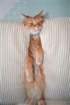 Кошки и собаки, проигравшие битву с мебелью, Фото: 7
