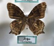 Экспозиция тропических насекомых в Тульском экзотариуме, Фото: 2