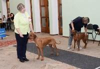 """Выставки собак в ДК """"Косогорец"""", Фото: 13"""