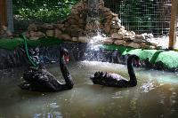 Куда свозить детей посмотреть на животных в 100 км от Тулы: обзор, Фото: 8