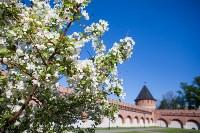 Яблони у кремля, Фото: 2