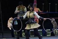 В Тульском цирке прошла премьера аква-шоу, Фото: 28
