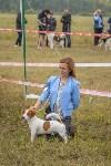 Международная выставка собак, Барсучок. 5.09.2015, Фото: 74