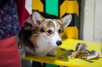 Выставка собак в Туле, Фото: 90