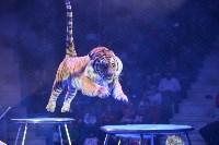 Цирковое шоу, Фото: 111