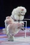 Тульский цирк, Фото: 24