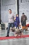Выставка собак в Туле 26.01, Фото: 20