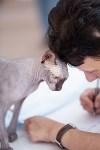 """Выставка """"Пряничные кошки"""". 15-16 августа 2015 года., Фото: 27"""