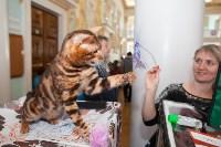 Международная выставка кошек. 16-17 апреля 2016 года, Фото: 104