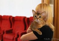 Выставка кошек, Фото: 2