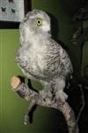 Какой же краеведческий музей без чучела совы? :), Фото: 8