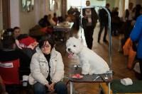 Выставка собак в Туле, 29.11.2015, Фото: 86